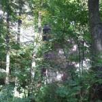 Ruiny Zamku w Pilicy ukryte w lesie