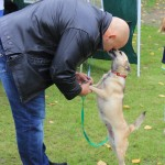 Kamil Bazelak z Sisi na pokazach psów organizowanych przez Fundację Przyjazna Łapa w Puławach (7)